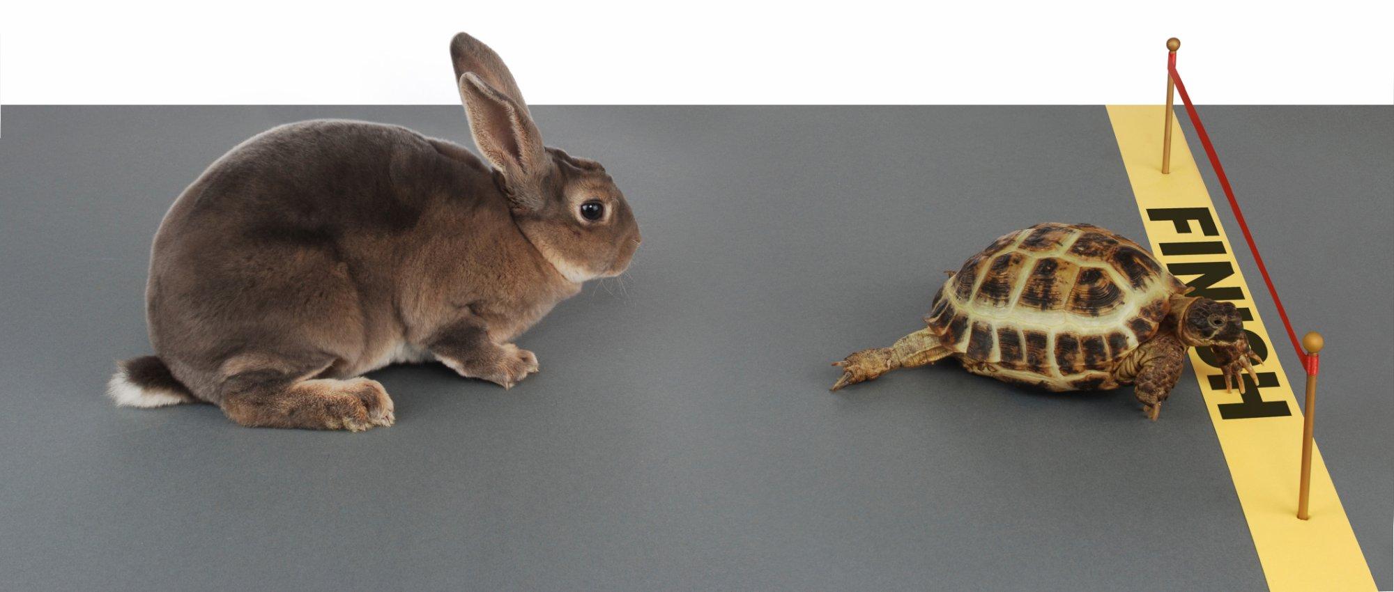 lepre tartaruga